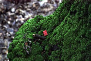moss2_small